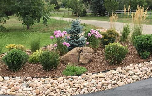 "Xeric flower bed with 2-4"" cobblestone border, brown wood mulch, dwarf Blue Spruce, moss rock boulder"