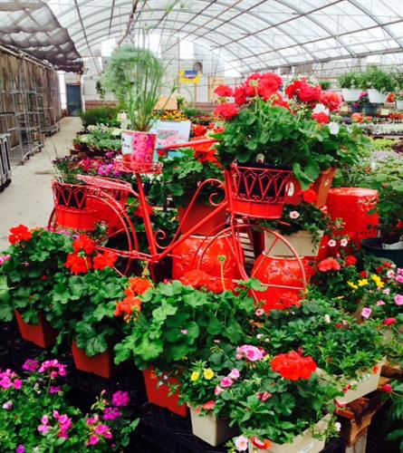 Garden Experts and beautiful outdoor plants