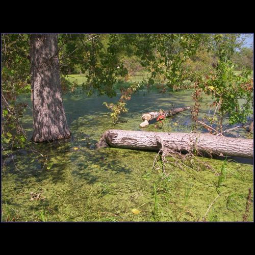 Environmental Engineering - Wetland Delineations