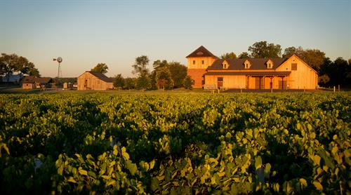 Gallery Image Chateau_BuDe_Winery-7_(1).jpg