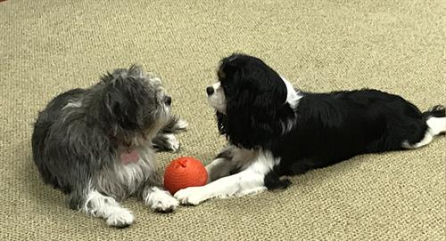 Gussie & Millie