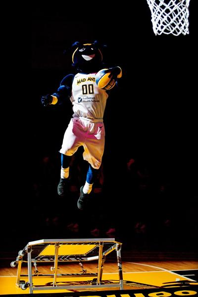 Gallery Image Mad_Ant.jpg