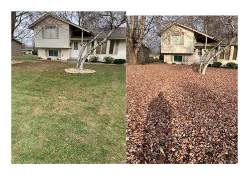 Gallery Image Leaf_Cleanups.jpg