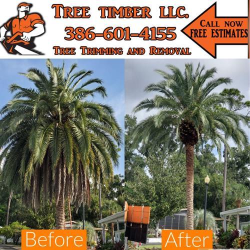 Call #TreeTimber Now ?? 386-601-4155 ?? #TheBrandYouTrust #HireAPro