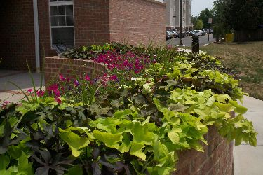 Annual flower rotation designed, installed and maintained by Terra Landscape and Design.