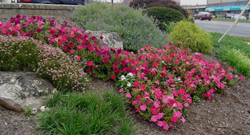 Perennial and shrub design and installation by Terra Landscape and Design