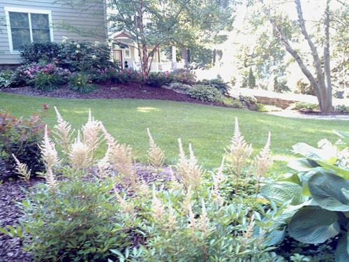 Plant design by Terra Landscape and Design