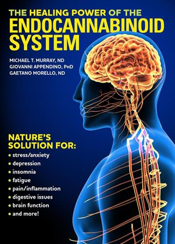 Human Body System for Cannabis