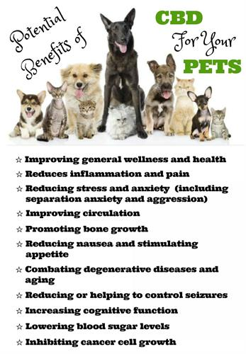Pet Facts