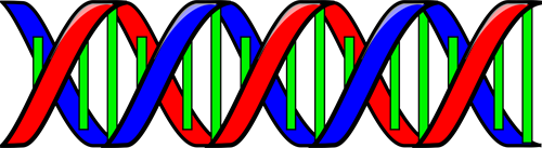 Gallery Image Anonymous-Double-Helix-DNA.png