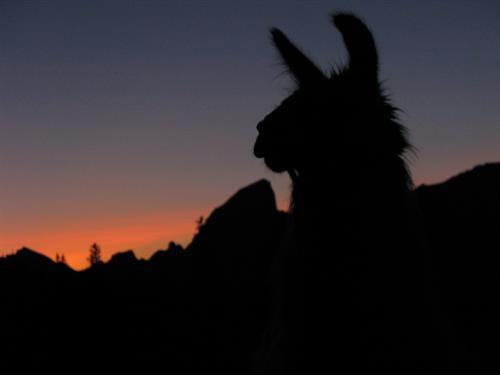 Lizard Head Peak Sunset