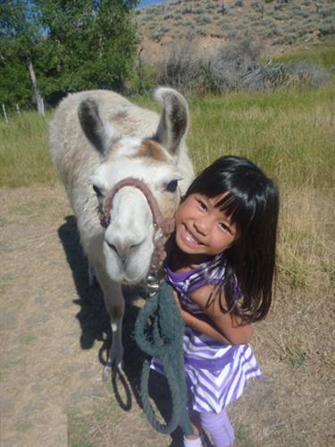 Pet a lovable llama