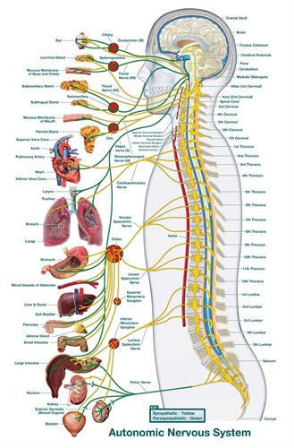 Nervous system function