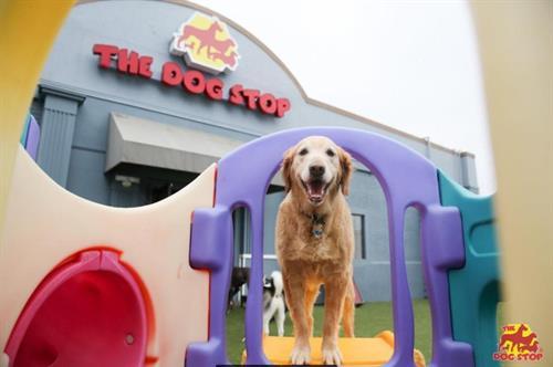 Fun at the Dog Stop!