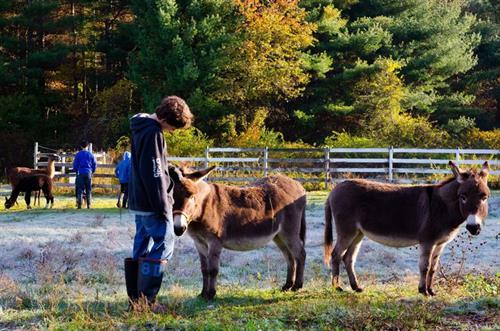 Hillside Farm & Animals