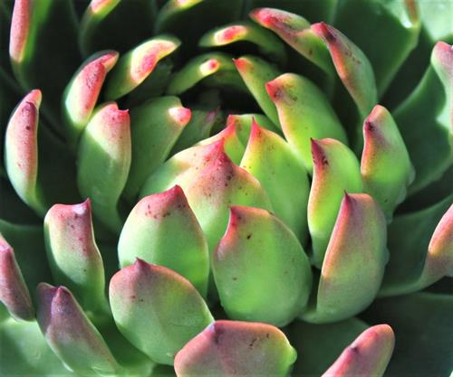 We have such an array of succulents for you!
