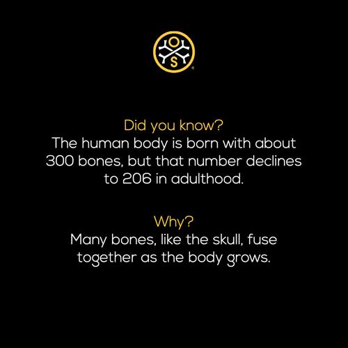 Gallery Image bones_fact_decrease.png
