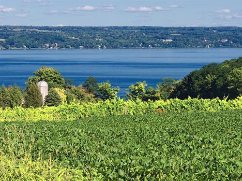 Unrivaled View of Cayuga Lake