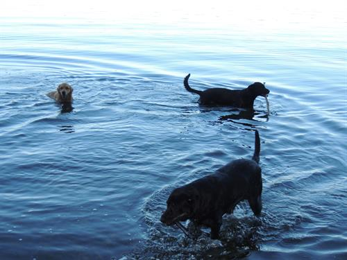 Dogs wading in Cayuga Lake - pups are welcome!