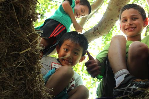 Den building and tree climbing