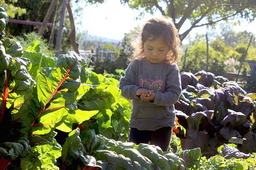 Exploring in the Kitchen Garden