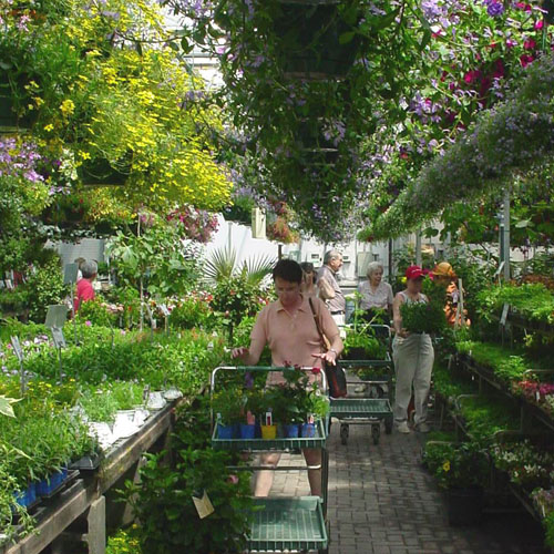 Hanging Baskets and more bedding annuals from May through July