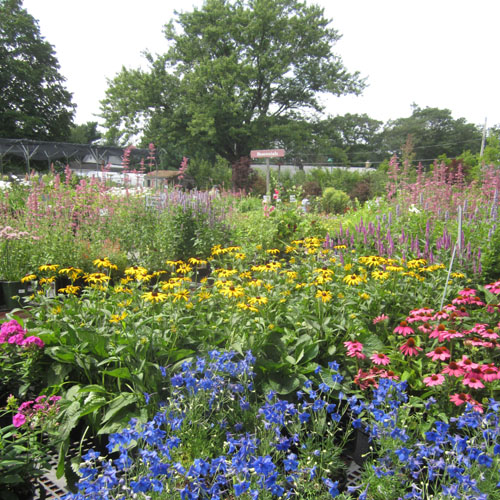 Perennials fill the yard from May through September