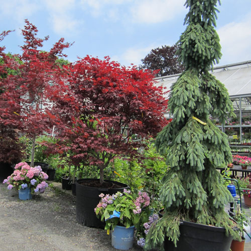 Specimen trees and shrubs