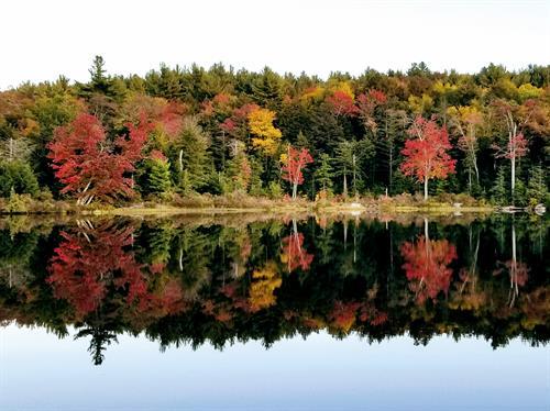 Fall foliage and Ward's Pond