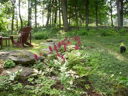 Astilbe for shade and some sun