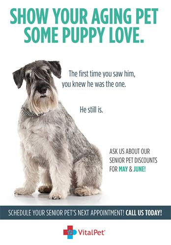 Print, Posters, Tabletops, POS, Online - VitalPet - Senior Pet Campaign - Houston, TX #Copywriting #Design