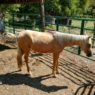 2 year old pony, Temperance...INCREDIBLY sweet!