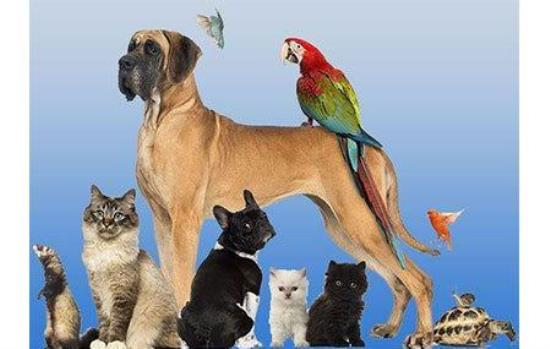 Animal Care & Products