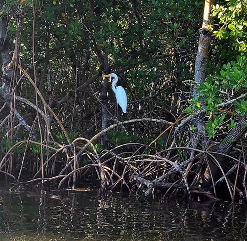 Tampa Bay Estuary WIldlife