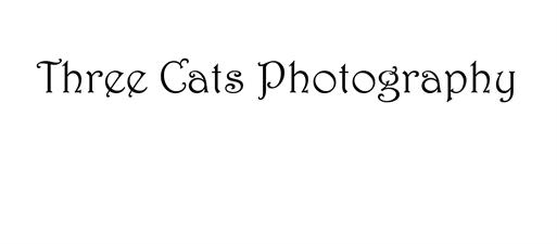 Three Cats Photography