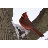 Penn State Master Gardeners to host Wildlife Tree Ornaments Workshop for Youth