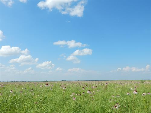 Blue skies and the beautiful prairie!
