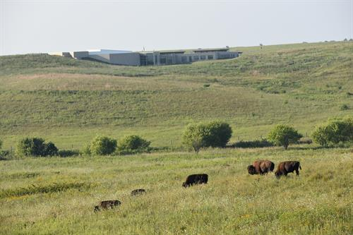 Bison and the wide expanse of the prairie