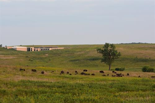 Bison and the Visitors Center in the background