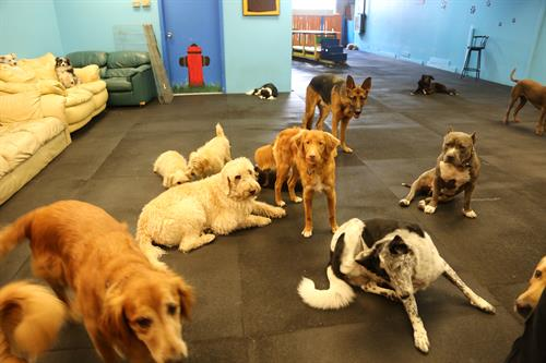 Some of the dogs at our playcare