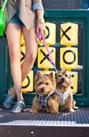 Bark by the Park Dog + Cat Boutique