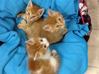 Kittens - Looking for their forever homes