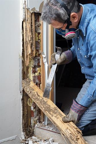 Termite Inspection and Treatment