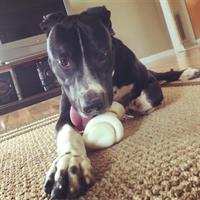 Gentry now known as Buddy, living it up with his new bone in his new home!