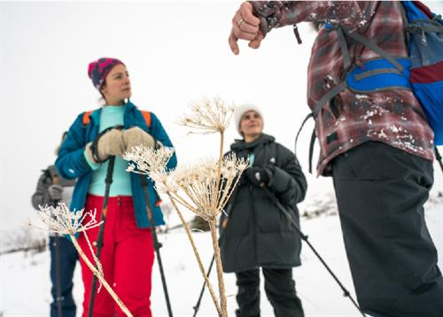 Eduating guests about the toxic Cow Parsnip during our Advanced Snowshoeing Adventure