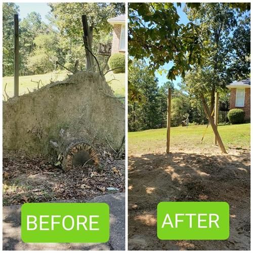 Before and After Stump Removal