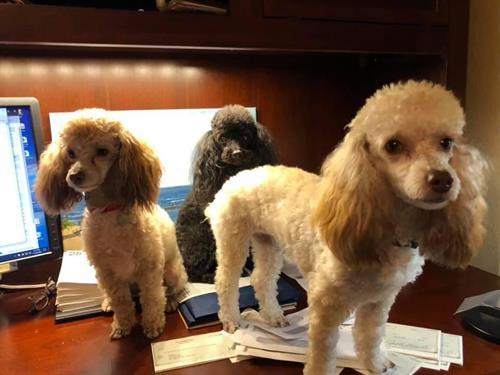 Company officers… Chloe (COO), Cory (CEO), Callie (CFO)