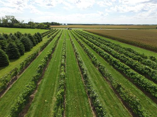 Vineyard Aerial View