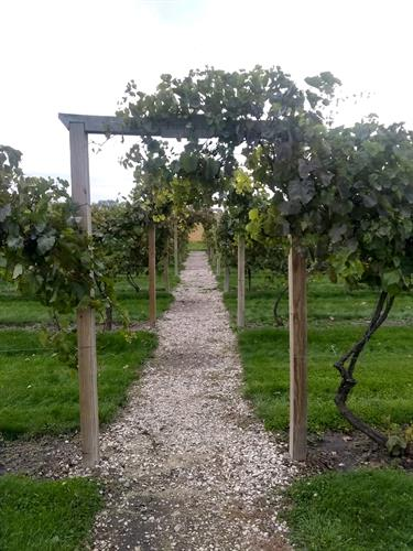 Path to the vineyard