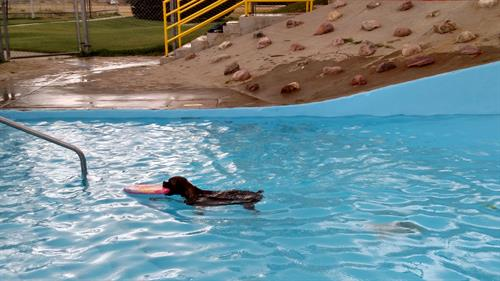 Swimming in Century West pool at Bark in the Park 2017